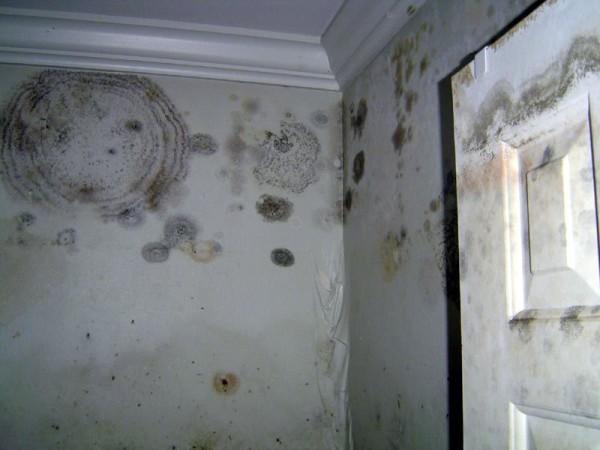 Перед началом отделочных работ необходимо избавиться от плесени и сырости на стенах