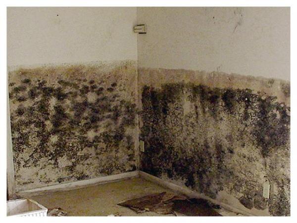 Средства против грибка на стенах